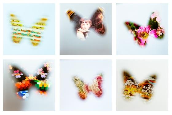 butterfly grid