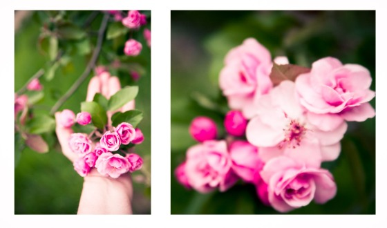 roseinhand