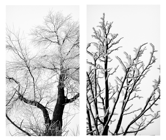 branches1-2