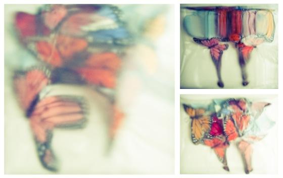 butterflyanne2