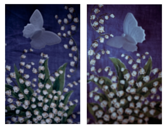 lily of the butterfly-2