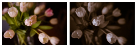 tulippy-2