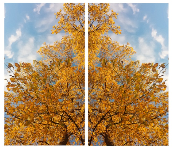 mirror tree-3