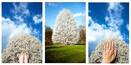 magnoliahand-2