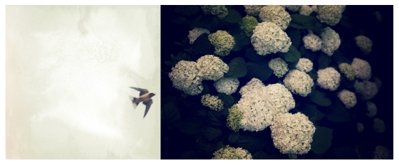 flightflowers2-2