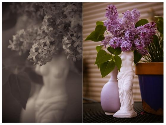 venus de lilac-2