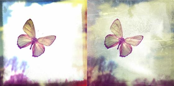 realbutterflies-2